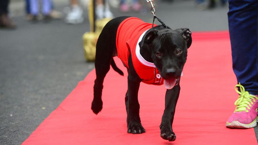 Desfile-de-perros_11