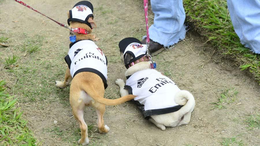 Desfile-de-perros_18