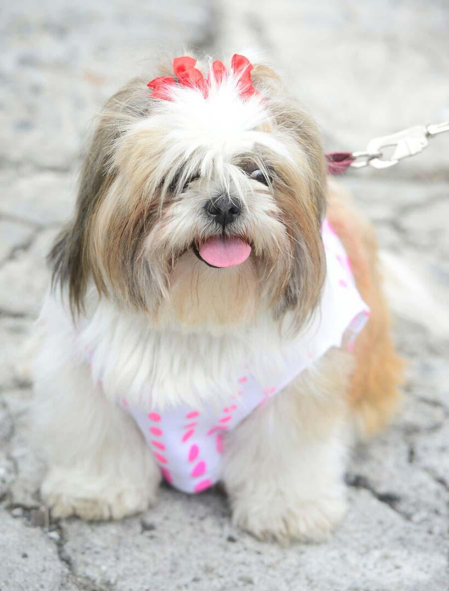 Desfile-de-perros