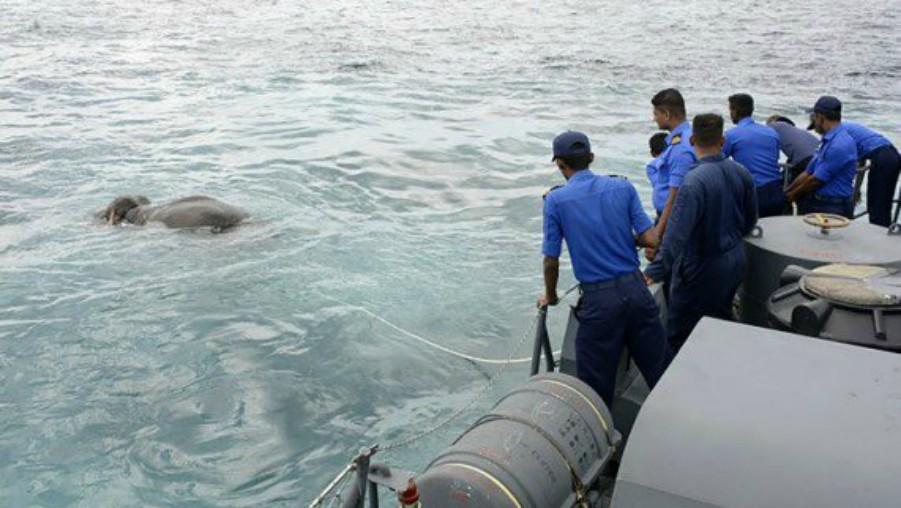 Marinos y buzos rescatan elefante arrastrado al mar en Sri Lanka