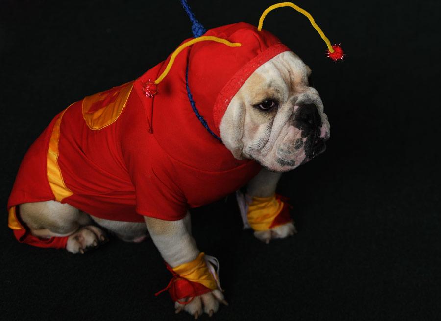 10 Divertidos Disfraces Para Perros