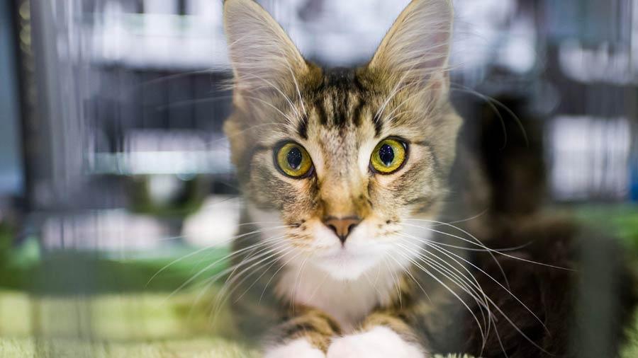 Cinco beneficios para los ni os que viven con gatos en - Cuidados paliativos en casa ...