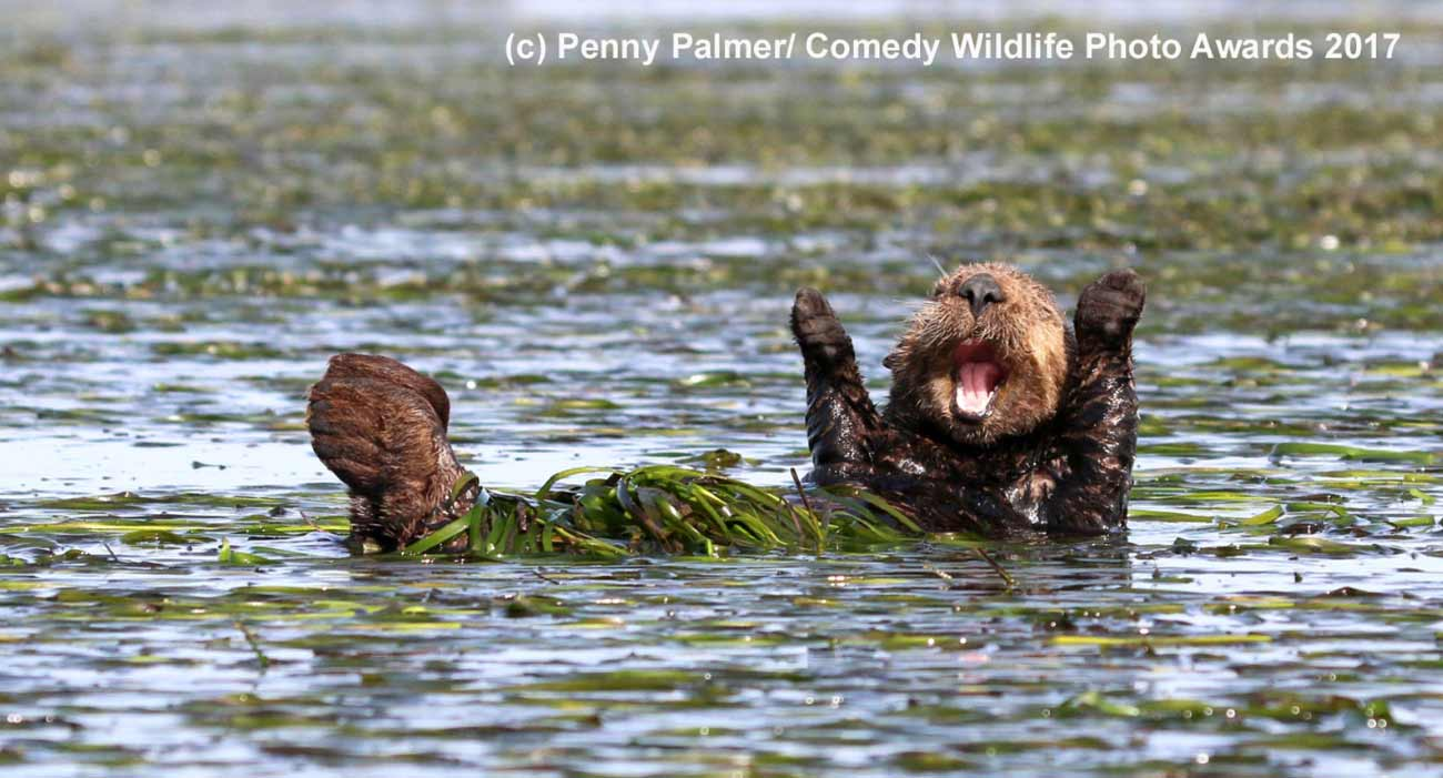 Comedy Wildlife Photos