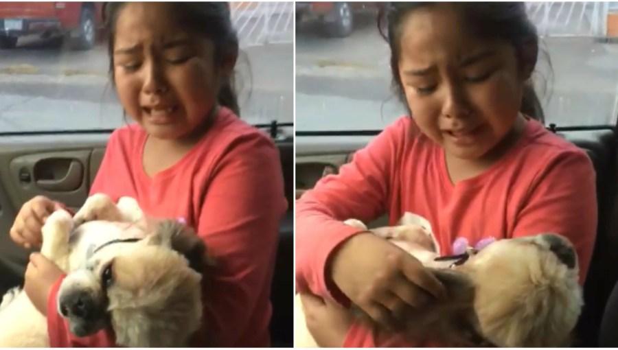 Niña llora inconsolablemente porque a su perro le cortaron el pelo