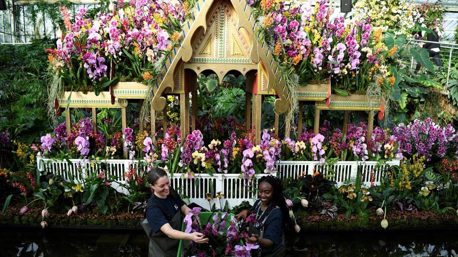 Festival de las Orquideas en Londres