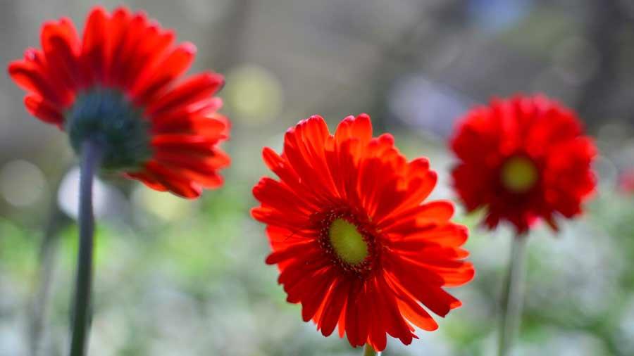 Corazones Y Flores Para El Amor Cultivados En Ataco Elsalvador Com