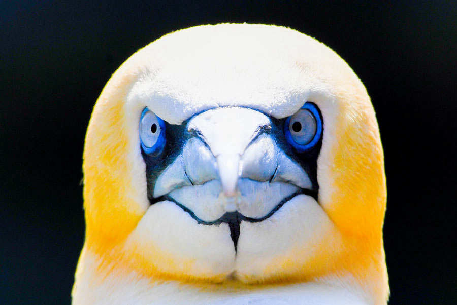 A gannet looks on in his enclosure at the Zoo in Bremerhaven