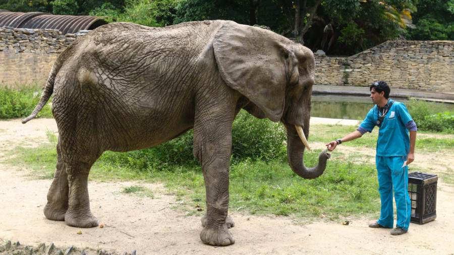 Peor de las noticias: falleció la elefanta Ruperta, ¿quién era? - La 100