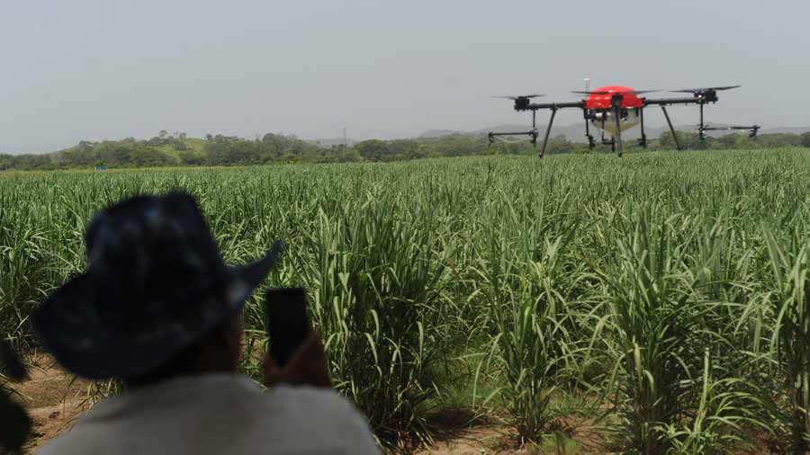 Resultado de imagen para drones caña de azucar
