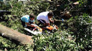 Árbol es derribado por fuertes vientos en el Parque Centenario y obstruye Alameda Juan Pablo II