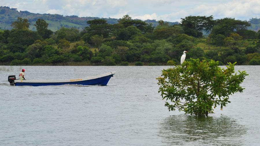 Petrograbados Isla Igualtepec