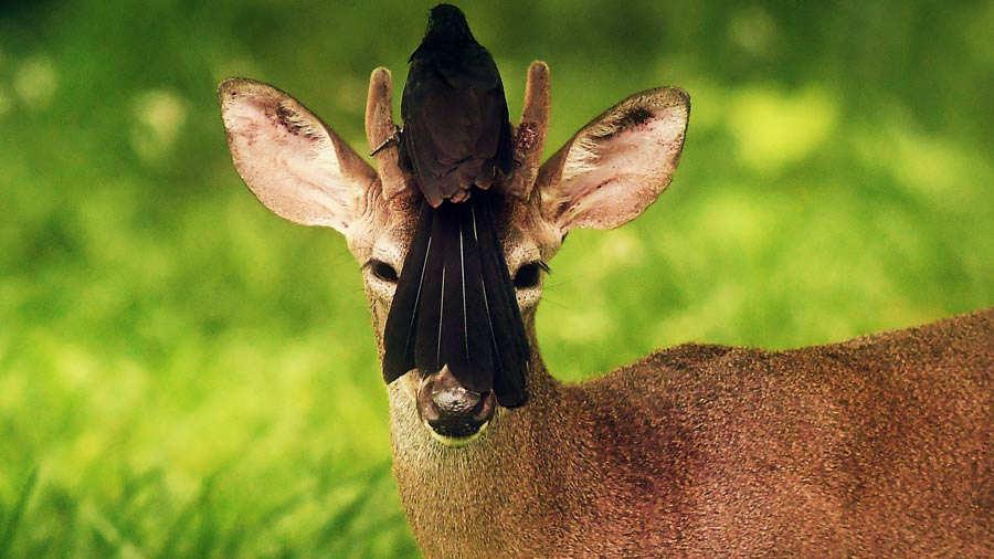 Resultado de imagen para foto de marvin recinos venado