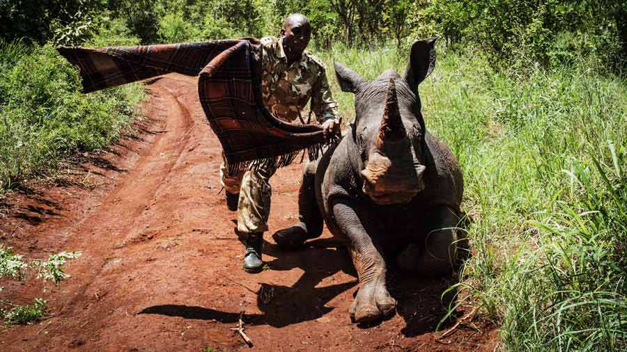Kenya rinoceronte