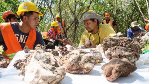 Descubren fósiles marinos de 120 millones de años en Metapán