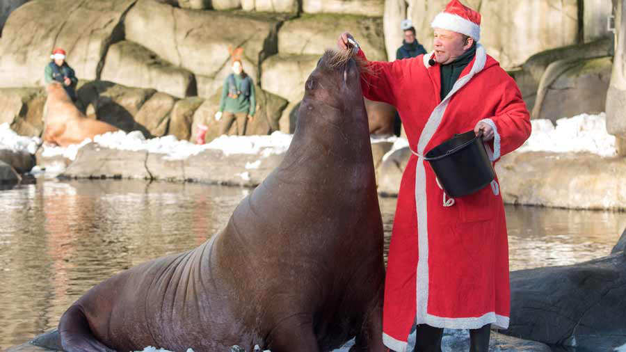 GERMANY-ANIMALS-ZOO-WALRUS-SANTA