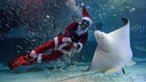 Espectaculares imágenes del ambiente navideño que invade el mundo