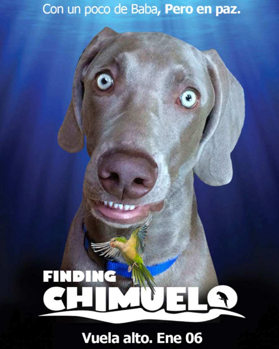Chimuelo12