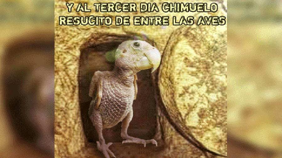 Chimuelo5