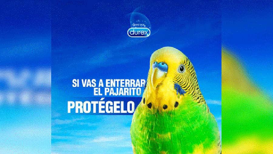 Chimuelo9