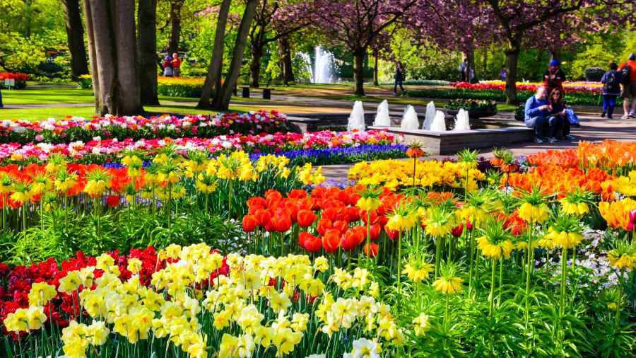 Conoce los 5 jardines m s hermosos del mundo for Los jardines del califa