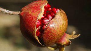 jugo de granada para la salud de la próstata