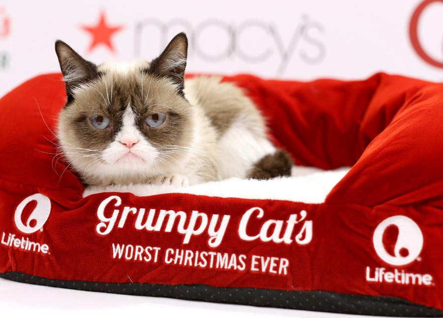 Lifetime's Grumpy Cat's Worst Christmas Ever
