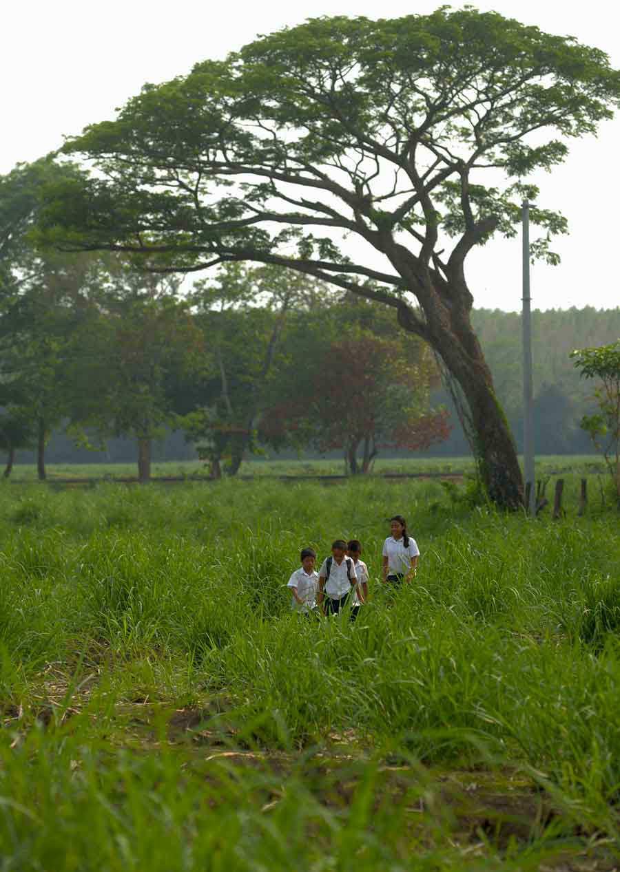 Historia de niños que recorren alrededor de 4 kilómetros para llegar de su casa a la escuela y viceversa.