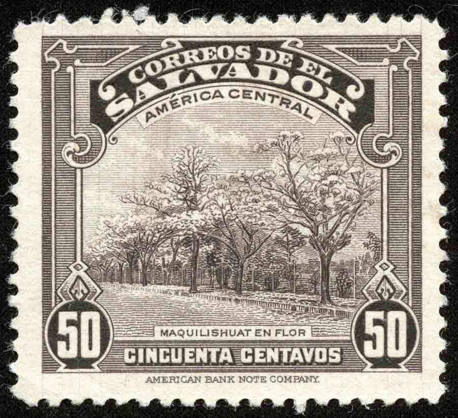 Salvador581