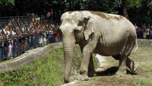 """Se cumplen 9 años sin Manyula, la """"Reina del zoológico"""""""