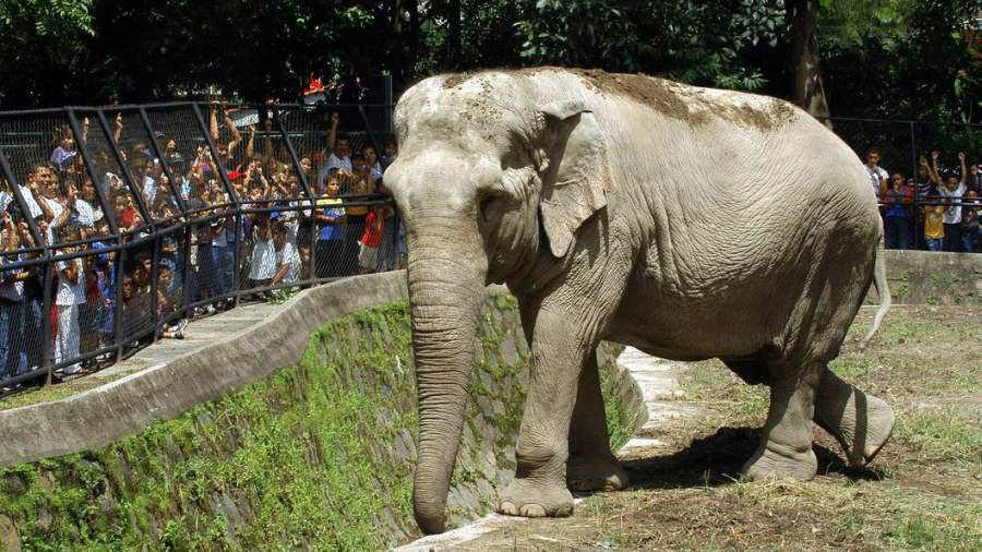 Elefante-Manyula9