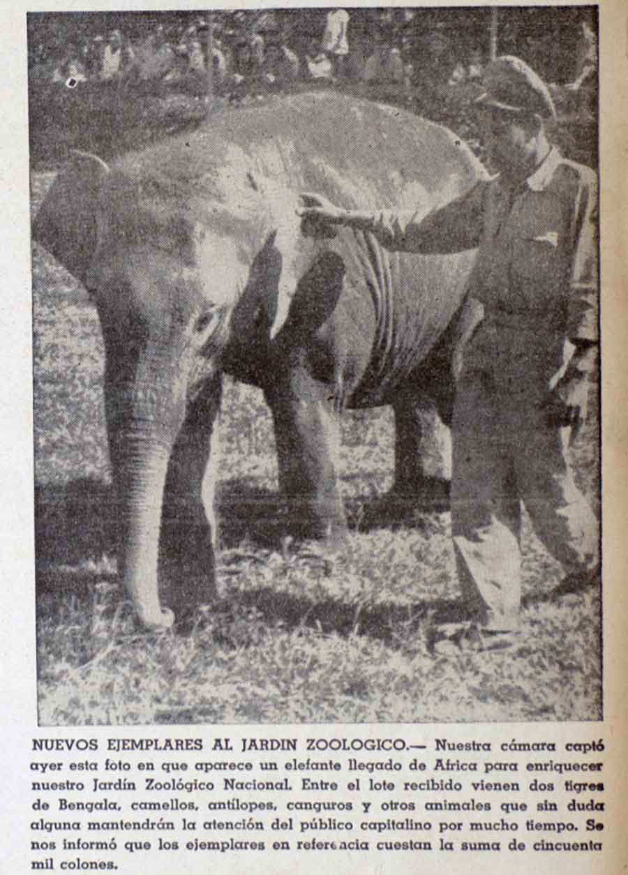 Elefante_01-
