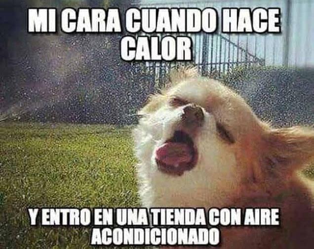 Memes-calor9
