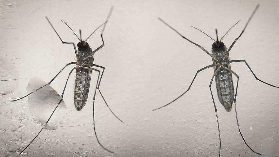 que consecuencias provoca el dengue