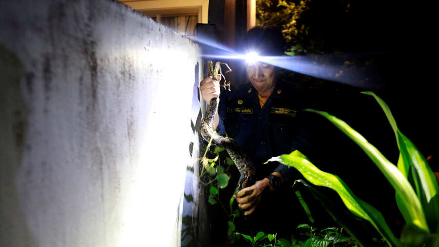 The Wider Image: Thailand's stealthy self-styled snake wrangler