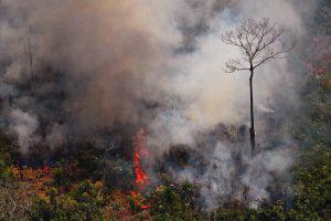 El incendio del Amazonas visto desde un avión