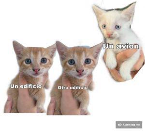Los Memes De Gatos Más Populares Del 2019 Cuál Es Tu