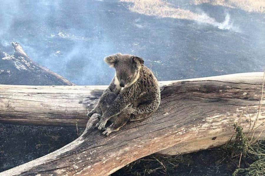 Incendio-Australia_02