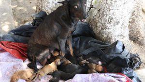 """La """"Negra"""", la perrita del parque Centenario que necesita ayuda"""