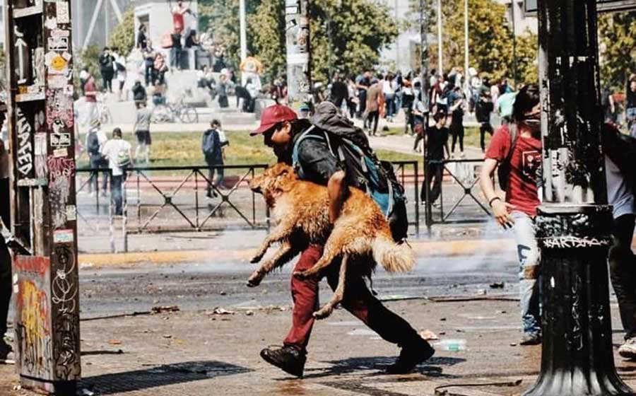 chileno-rescata-a-perro-de_0_309_958_596-1