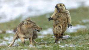 Los increíbles secretos que guardan las imágenes ganadoras del concurso fotógrafo del año de vida silvestre