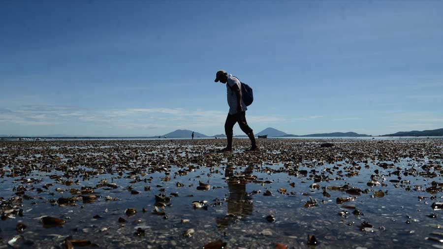 Extraña mortandad de moluscos en 7 kilómetros de costa en La Unión causa alarma entre pescadores - elsalvador.com