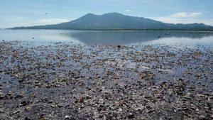 Pescadores sospechan que derrame de químico provocó la mortandad de los moluscos en La Unión