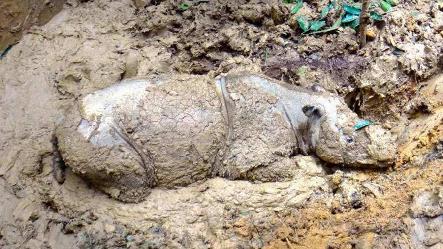 Plight_Borneo_Sumatran_Rhino_2005_5