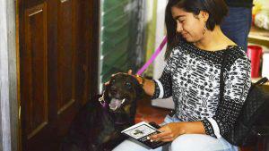 """""""La Negra"""", la perrita del parque Centenario, ya fue adoptada y tiene un nuevo hogar"""