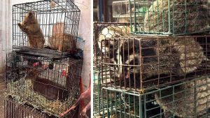 Venados, murciélagos y hasta koalas: imágenes del mercado chino donde nació el brote de coronavirus