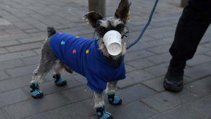 Las mascarillas improvisadas de mascotas chinas para prevenir posibles contagios del coronavirus