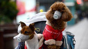 ¿Existe la posibilidad de contagio del coronavirus a las mascotas?