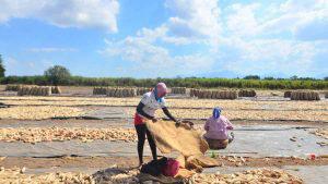 Cuarentena amenaza labor agrícola desempeñada por mujeres en Usulután