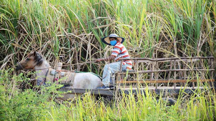agricultura-cuarentena