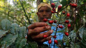 Estos son los remedios tradicionales que una tribu indígena de Brasil usa contra el COVID-19